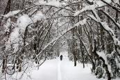 Bosque nevado de Pineta.